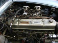 Austin Healey 3000 BJ7 - <small></small> 59.000 € <small>TTC</small> - #15